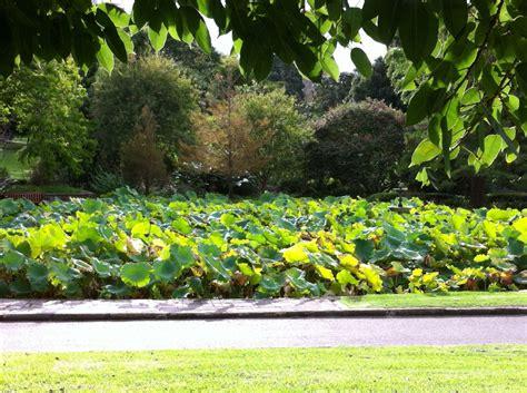 flower garden sydney 100 flower garden sydney sydney camellia gardens