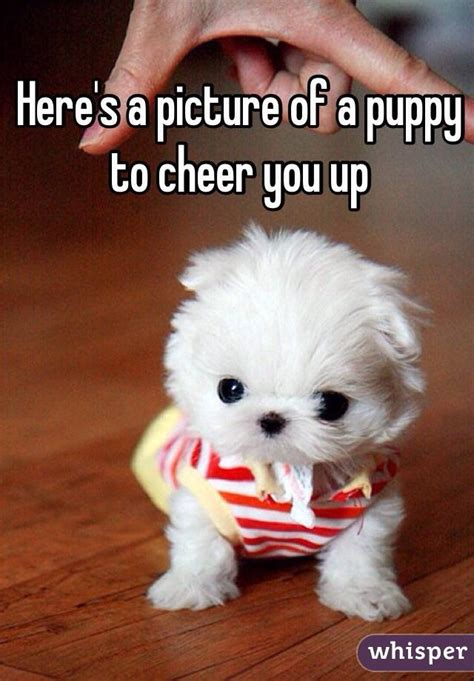 cheer up puppy top gamer