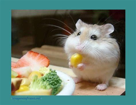 imagenes animales bonitas imagenes bonitas de animales bebes imagenes para facebook