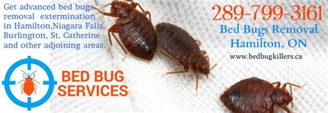 bed bug removal 20 best images about bed bugs removal on pinterest home