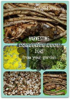 Catchment Detox Walkthrough by Dandelion Root Tea On Detox Water Weight And