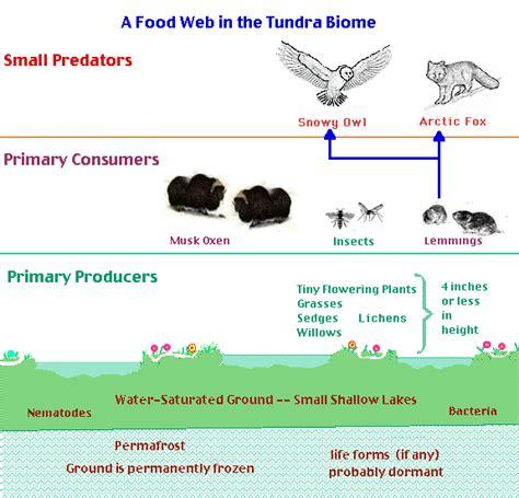 ecosystem food web diagram eco notes