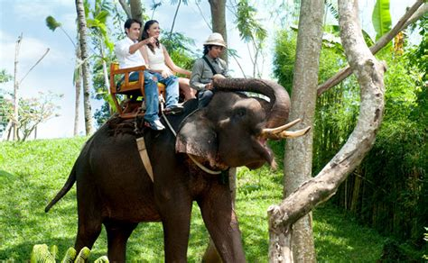 Bali Zoo Zoo With Lunch A Child bali zoo park packages 12 most popular bali zoo park