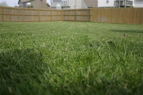 tips  feeding lawns     put fertilizer  lawn