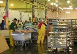 fishing boat deckhand salary alaska seafood processing employment working on the