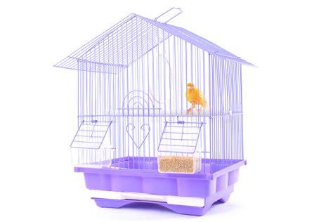 canarino in gabbia canarino nella gabbia fotografia stock immagine di bianco