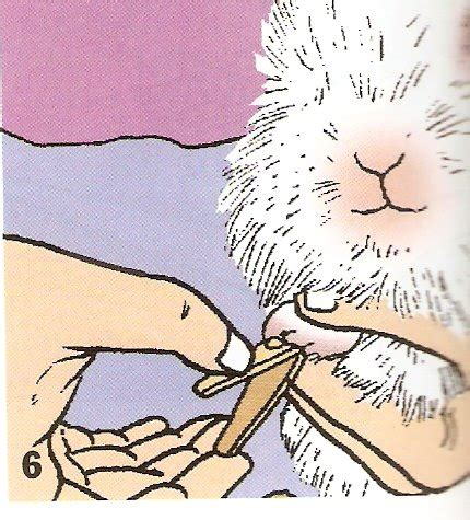 Hair Dryer Kelinci rabbit farm lamongan