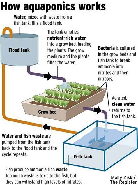 Portable Solar Powered Aquaponics Greenhouse Can Grow Food
