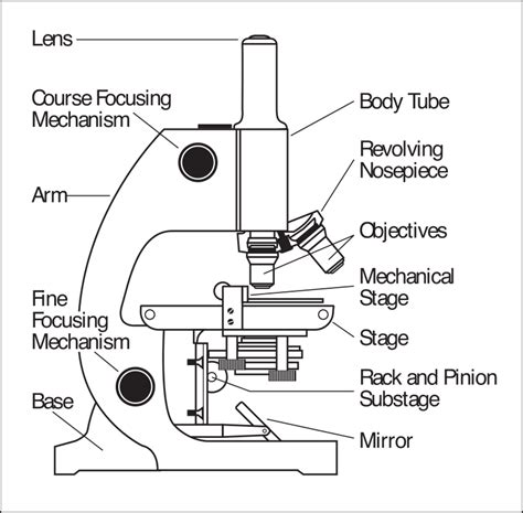 clipart microscope parts labeled