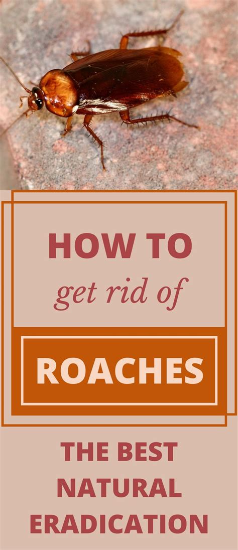 how to get rid of roaches in the bathroom best 25 roach killer ideas on pinterest