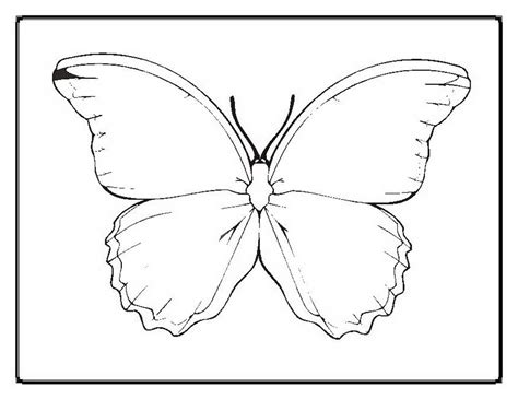 free coloring book printouts free animal printouts 494113 171 coloring pages for free 2015