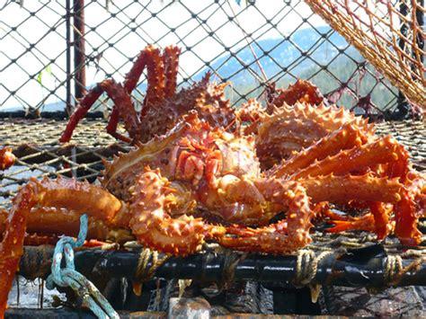 alaskan crab fishing season alaskan fishing resorts