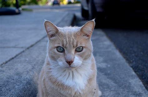 il gatto puzzolone testo il gatto puzzolone canzone per bambini dogalize