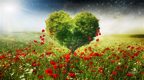 green love heart tree poppies wallpapers hd wallpapers