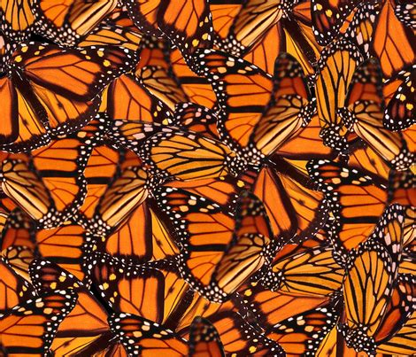 monarch design monarch butterfly fabric jenfur spoonflower