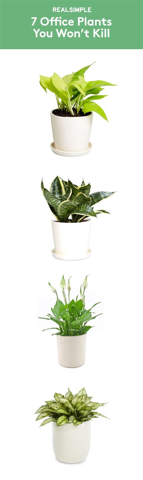 best office plant 25 best ideas about office plants on plants