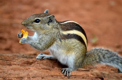 squirrel images squirrel images
