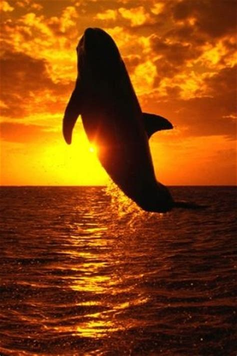 Sunset Orca Pin Warrior Pins - whale at sunset wow silhouette