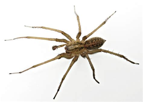 spider bites guide   spiders preppers