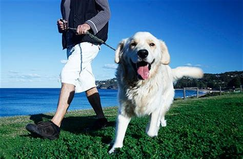 how to your puppy to walk on a leash how to keep your healthy with diet and exercise top tails 174 walking pet