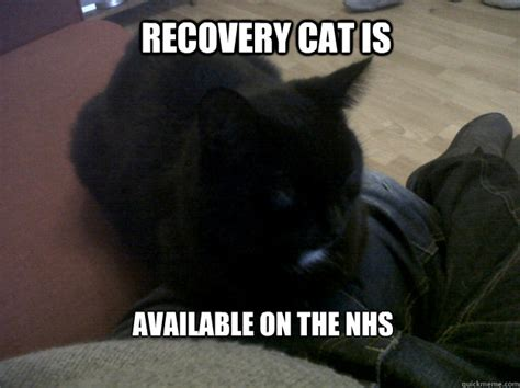Recovery Memes - recovery cat memes quickmeme