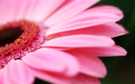 Orchidee Gelbe Blätter 5399 by Pink Bl 252 Tenbl 228 Tter Hintergrundbilder Pink Bl 252 Tenbl 228 Tter