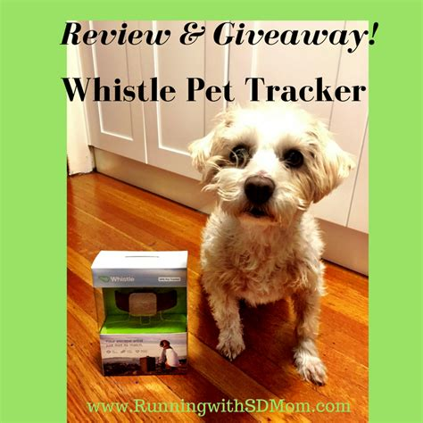 whistle tracker review running with sd whistlefit meet sddogmurray whistle pet tracker review