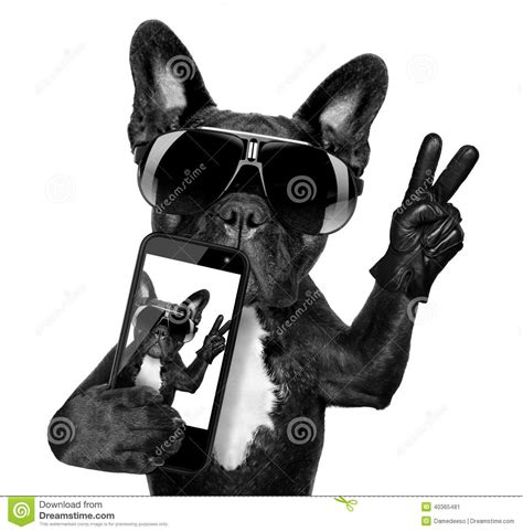 Kaos Selfie Selfie Graphic 15 chien de selfie photo stock image 40365481