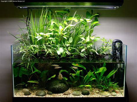Interview With Devin Biggs Chasing Linnaeus Fish Tank Planter