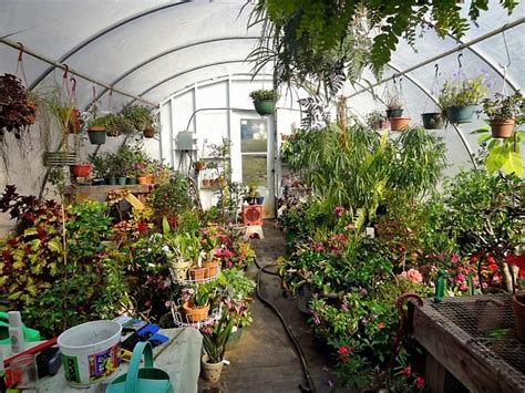 backyard greenhouse winter pinterest winter garden ideas photograph greenhouse in win