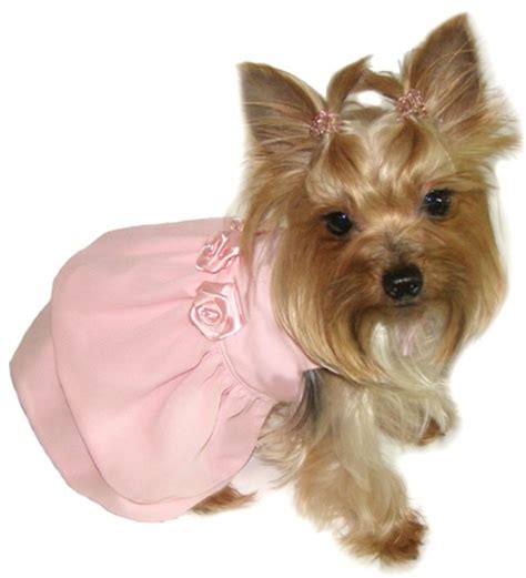 yorkie dresses 17 best images about yorkie evening wedding dress and tutu on pets puppys