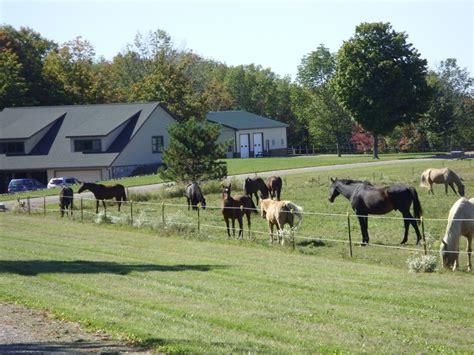 boarding boston sedona ranch boarding farms in boston new york