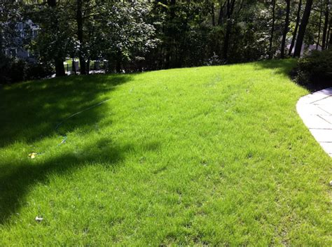 hydroseeded lawn landscape and waterproofing contractors winchester ma 01890 hydroseeding