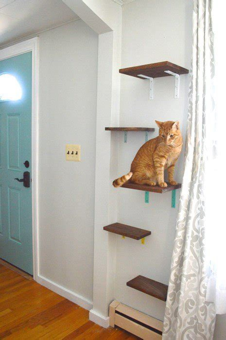 cat wall shelves not your typical cat tree 3 creative diy cat perches the catnip times