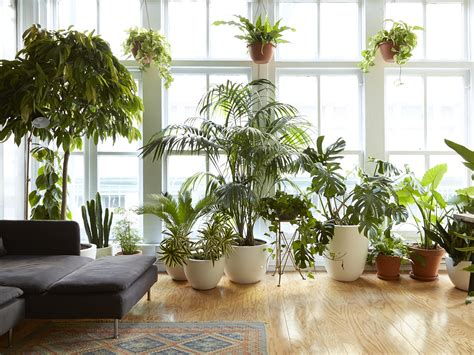 8 houseplants that can survive urban apartments low light and under watering apartment therapy