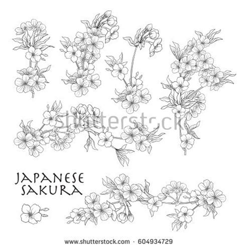 Cherry Blossom Branch Drawing Outline by Branch Cherry Blossoms Japanese Cherry Stock Stock Vector 604934729