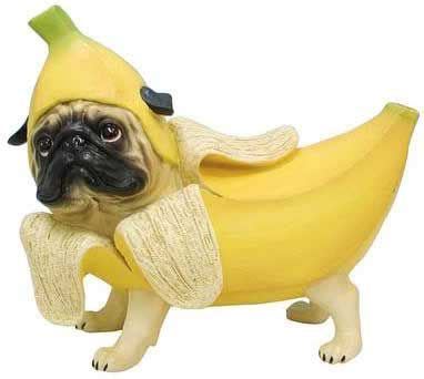 pug costumes for dogs best 25 pugs in costume ideas on pug costume pugs and pug puppies