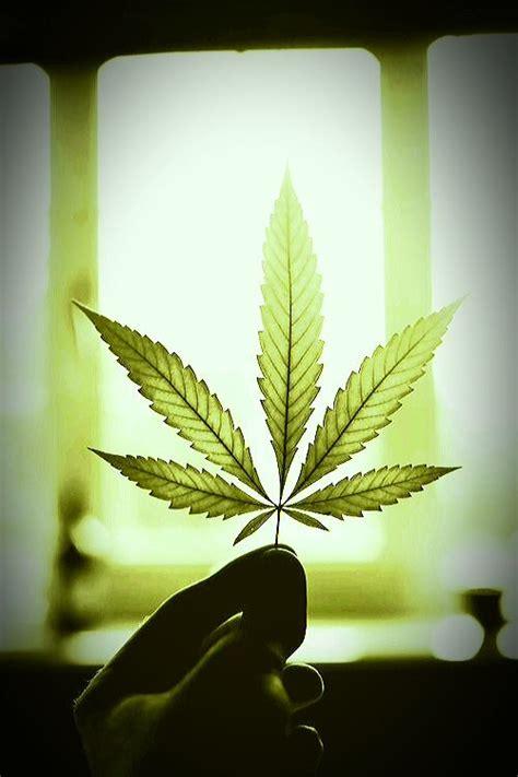 imagenes chidas weed resultado de imagen de marihuana tumblr weed pinterest