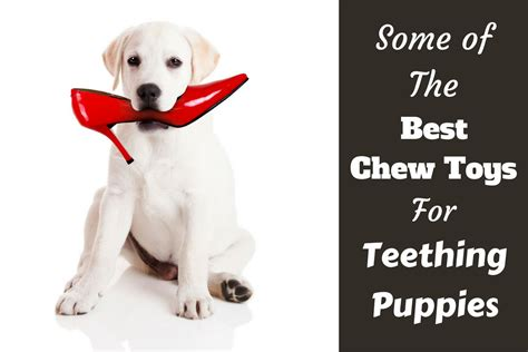 chew toys for teething puppies best chew toys for puppies while teething