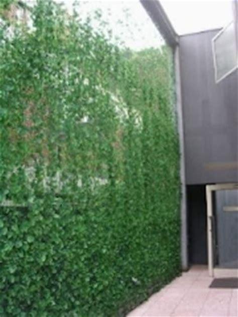 giardini in verticale giardino verticale giardino in terrazzo