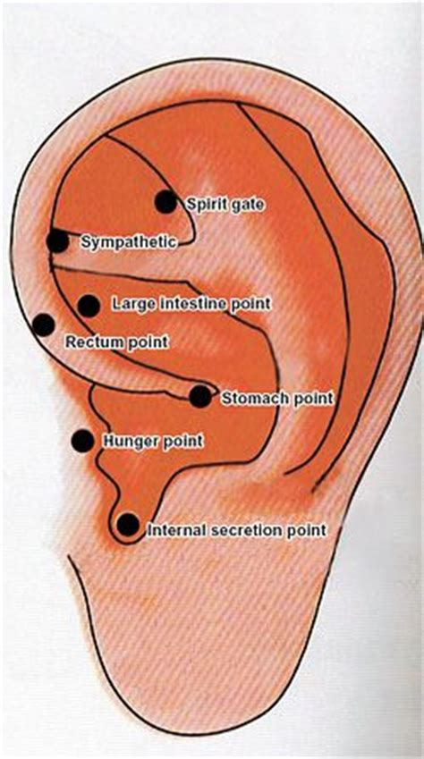Acupuncture Detox Singapore by 32 Best Images About Ear Acupressure On Ear