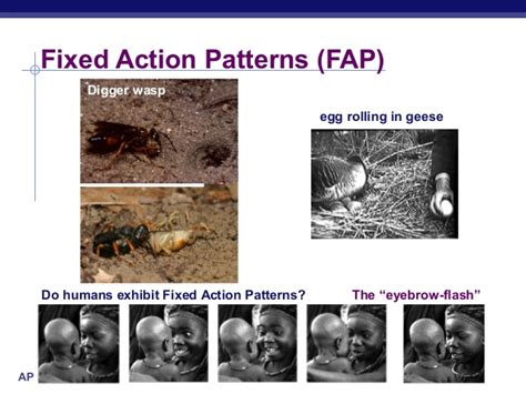 fixed action pattern definition biology 63 ch51behavior2005