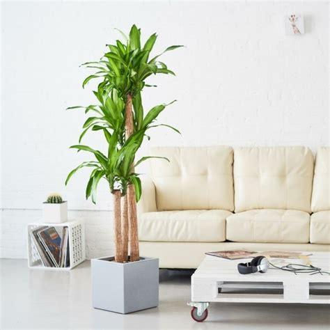 fensterbrett wohnzimmer beautiful grose wohnzimmer pflanzen gallery house design