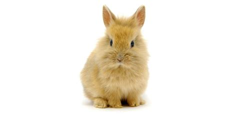 like a bunny rabbit diet what to feed a rabbit willasark