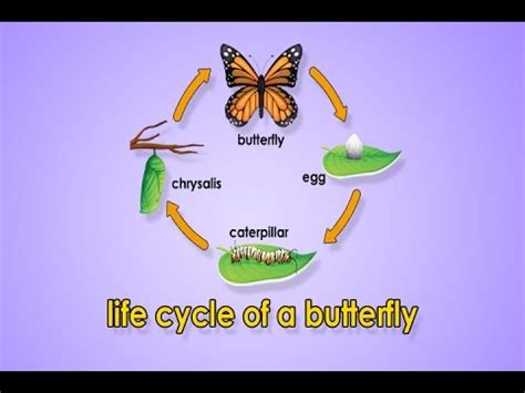 emotional butterfly the metamorphosis and the lessons learned books cycle of a butterfly metamorphosis metamorphosis