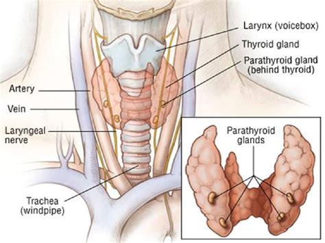 Foxx Has Surgery For Gland Problem by Parathyroid Gland Hormone Definition Disease Symptoms