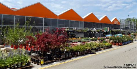 home depot nursery trees thenurseries