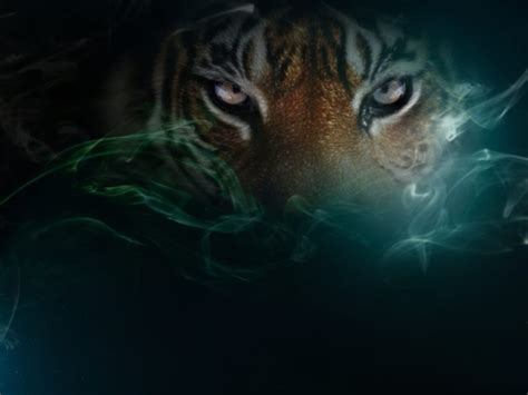 imagenes wallpapers de ojos ojos de tigre 800x600 fondos de pantalla y wallpapers