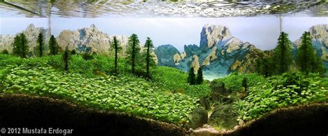Mountain Aquascape by 2012 Aga Aquascaping Contest 75