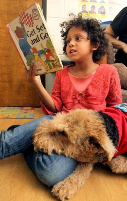 therapy dogs international 17 best ideas about therapy on therapy dogs service dogs and